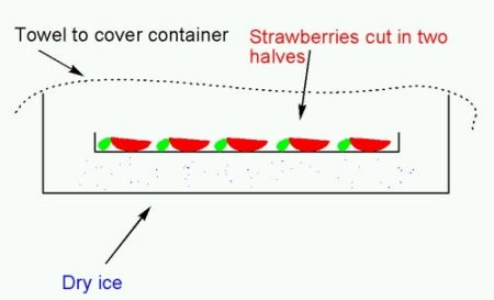 strawberry-dryice.jpg