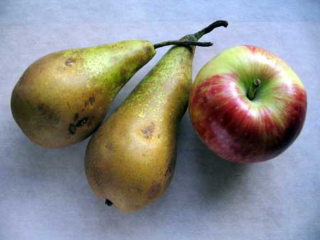 apple-pear.jpg