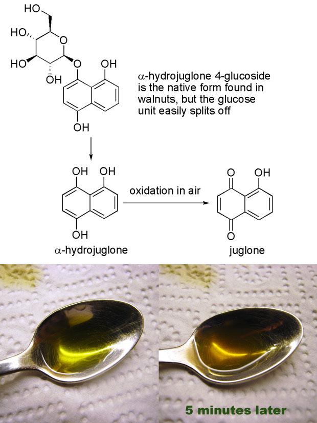 juglone-nocino-spoon