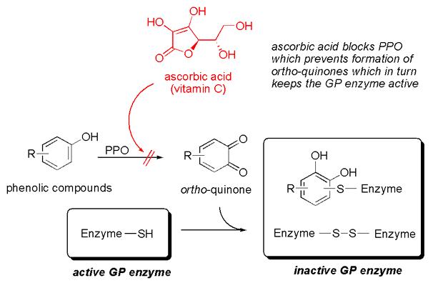 PPO-ascorbic-acid